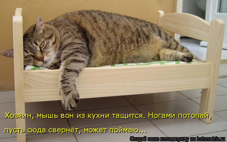 Котоматрица: Хозяин, мышь вон из кухни тащится. Ногами потопай, пусть сюда свернёт, может поймаю...