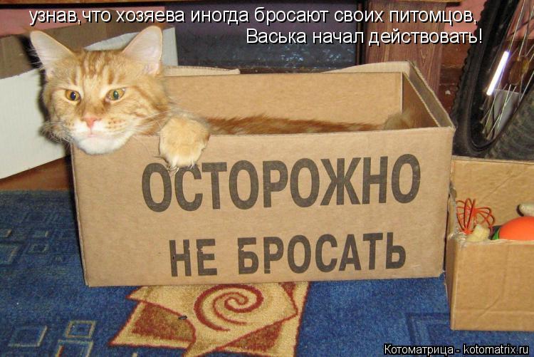 Котоматрица: узнав,что хозяева иногда бросают своих питомцов, Васька начал действовать!
