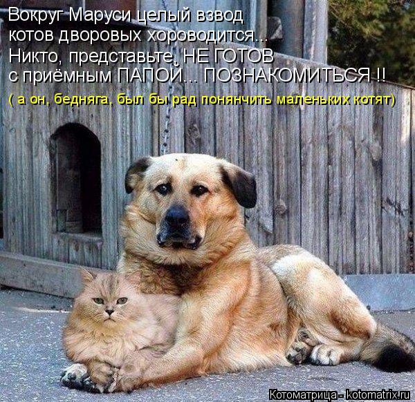 Котоматрица: Вокруг Маруси целый взвод котов дворовых хороводится... Никто, представьте, НЕ ГОТОВ с приёмным ПАПОЙ... ПОЗНАКОМИТЬСЯ !! ( а он, бедняга, был б