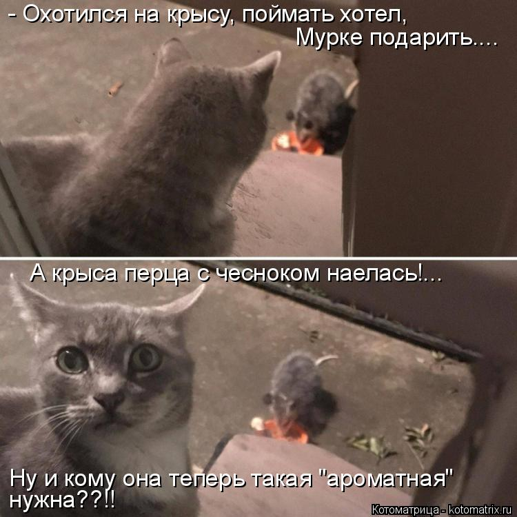 """Котоматрица: Ну и кому она теперь такая """"ароматная"""" нужна??!! - Охотился на крысу, поймать хотел, Мурке подарить.... А крыса перца с чесноком наелась!..."""