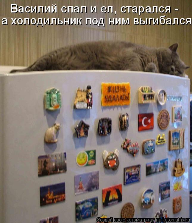 Котоматрица: Василий спал и ел, старался - а холодильник под ним выгибался
