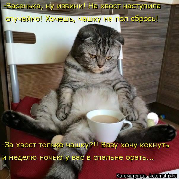 Котоматрица: -Васенька, ну извини! На хвост наступила  случайно! Хочешь, чашку на пол сбрось! -За хвост только чашку?!! Вазу хочу кокнуть  и неделю ночью у ва