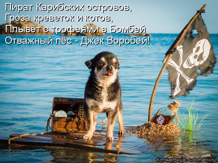 Котоматрица: Пират Карибских островов, Гроза креветок и котов, Плывёт с трофеями в Бомбей Отважный пёс - Джек Воробей!