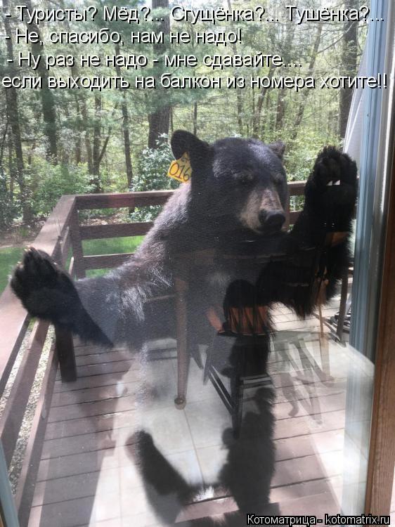 Котоматрица: - Туристы? Мёд?... Сгущёнка?... Тушёнка?... - Не, спасибо, нам не надо! - Ну раз не надо - мне сдавайте.... если выходить на балкон из номера хотите!!