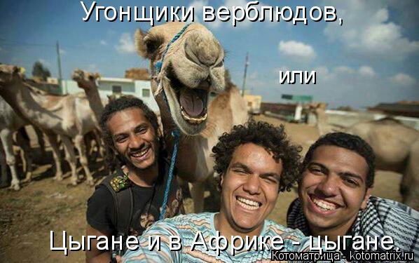 Котоматрица: Угонщики верблюдов,  или  Цыгане и в Африке - цыгане.