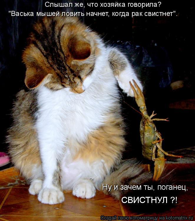 """Котоматрица: Слышал же, что хозяйка говорила? """"Васька мышей ловить начнет, когда рак свистнет"""". Ну и зачем ты, поганец,  СВИСТНУЛ ?!"""