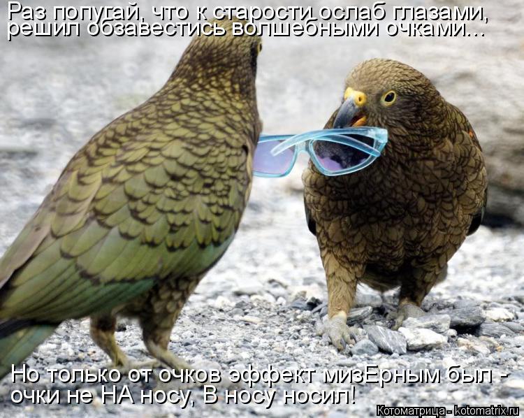 Котоматрица: Раз попугай, что к старости ослаб глазами, решил обзавестись волшебными очками...  Но только от очков эффект мизЕрным был - очки не НА носу, В