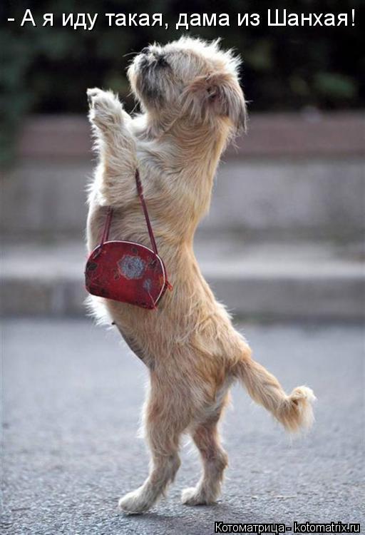 Котоматрица: - А я иду такая, дама из Шанхая!