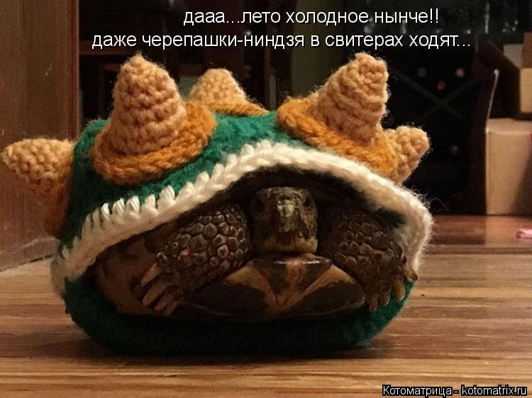 Котоматрица: дааа...лето холодное нынче!! даже черепашки-ниндзя в свитерах ходят...