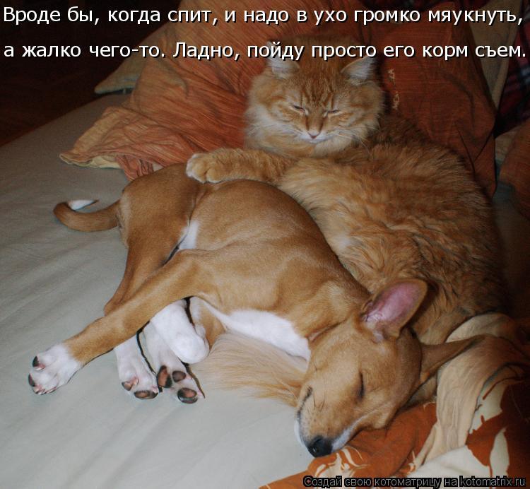 Котоматрица: Вроде бы, когда спит, и надо в ухо громко мяукнуть,  а жалко чего-то. Ладно, пойду просто его корм съем...