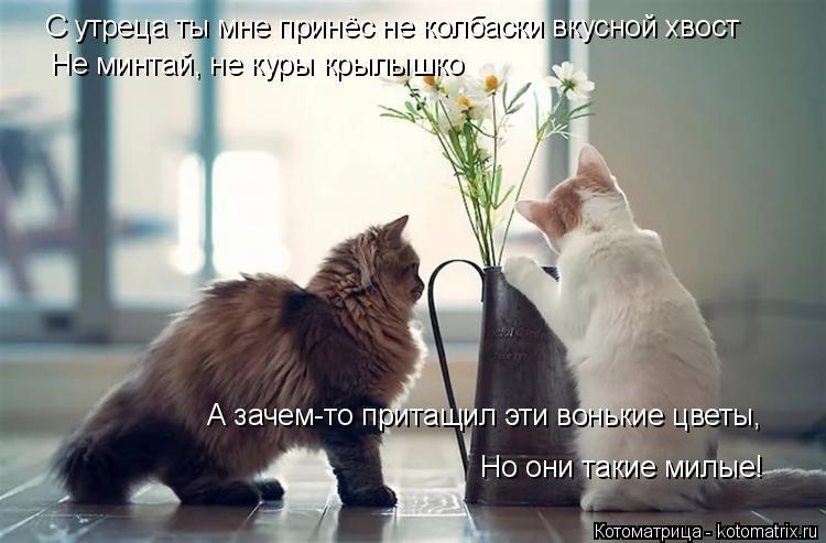 Котоматрица: С утреца ты мне принёс не колбаски вкусной хвост Не минтай, не куры крылышко А зачем-то притащил эти вонькие цветы, Но они такие милые!
