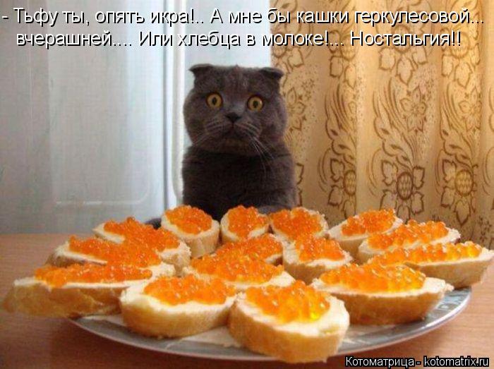 Котоматрица: - Тьфу ты, опять икра!.. А мне бы кашки геркулесовой...  вчерашней.... Или хлебца в молоке!... Ностальгия!!