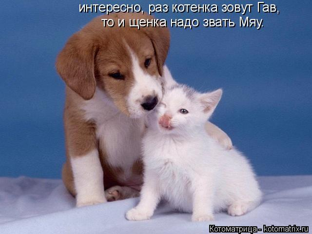 Котоматрица: интересно, раз котенка зовут Гав, то и щенка надо звать Мяу.