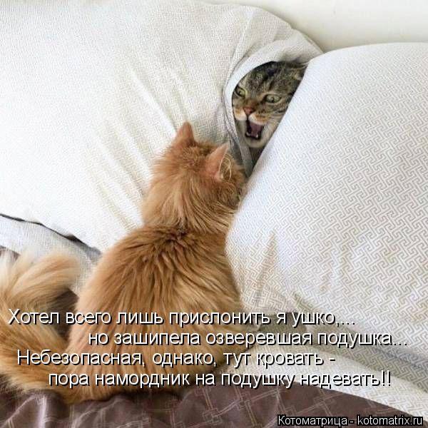 Котоматрица: Хотел всего лишь прислонить я ушко,... но зашипела озверевшая подушка... Небезопасная, однако, тут кровать - пора намордник на подушку надеват