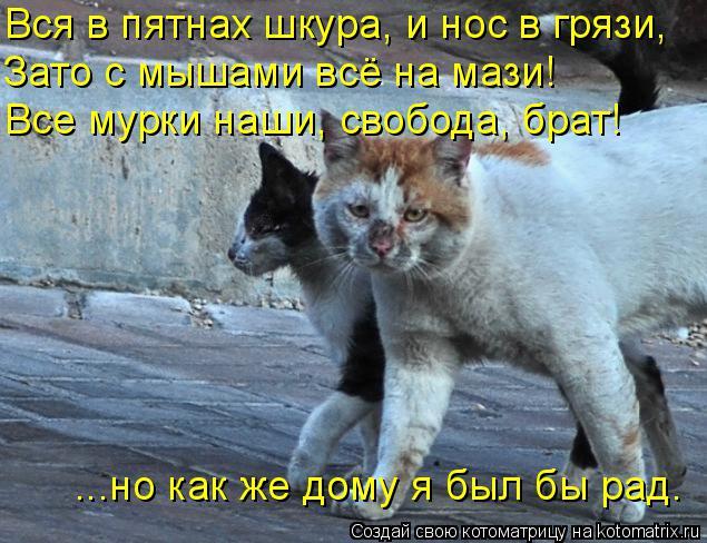 Котоматрица: Вся в пятнах шкура, и нос в грязи, Зато с мышами всё на мази! Все мурки наши, свобода, брат! ...но как же дому я был бы рад.