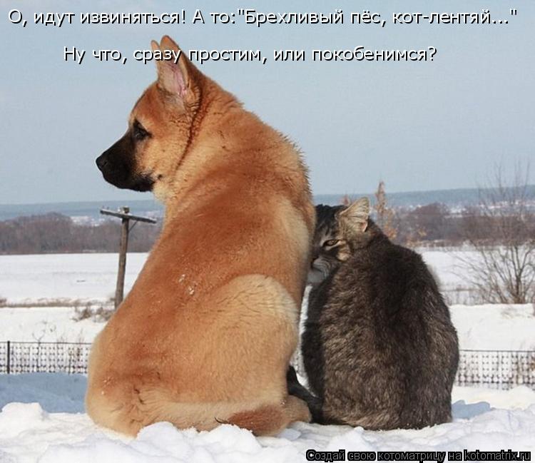 """Котоматрица: О, идут извиняться! А то:""""Брехливый пёс, кот-лентяй..."""" Ну что, сразу простим, или покобенимся?"""