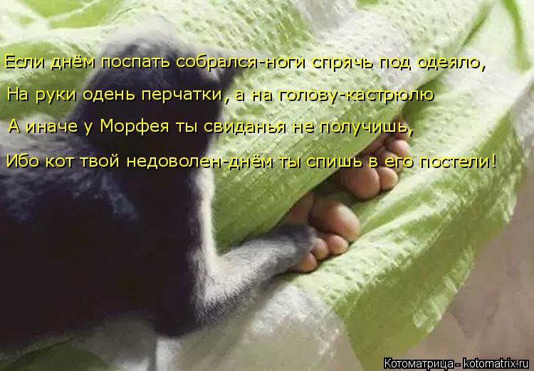 Котоматрица: На руки одень перчатки, а на голову-кастрюлю А иначе у Морфея ты свиданья не получишь,  Ибо кот твой недоволен-днём ты спишь в его постели! Ес