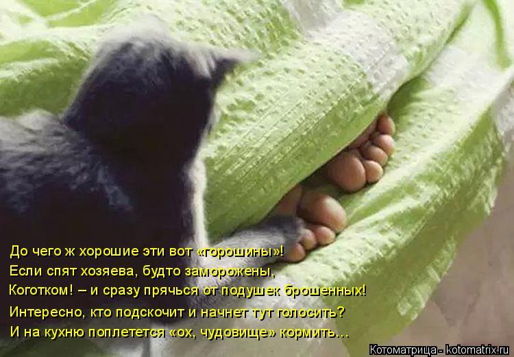 Котоматрица: До чего ж хорошие эти вот «горошины»! Коготком! – и сразу прячься от подушек брошенных! Если спят хозяева, будто заморожены, Интересно, кто п