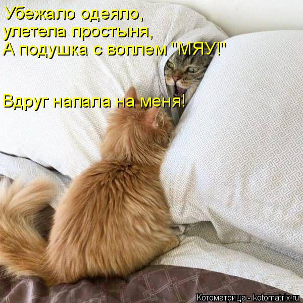 "Котоматрица: Убежало одеяло, улетела простыня, А подушка с воплем ""МЯУ!"" Вдруг напала на меня!"