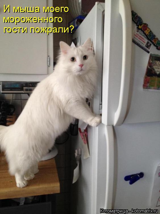 Котоматрица: И мыша моего мороженного гости пожрали?