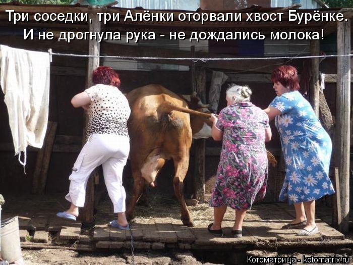 Котоматрица: И не дрогнула рука - не дождались молока! Три соседки, три Алёнки оторвали хвост Бурёнке.