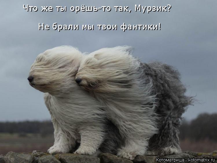 Котоматрица: Что же ты орёшь-то так, Мурзик?  Не брали мы твои фантики!
