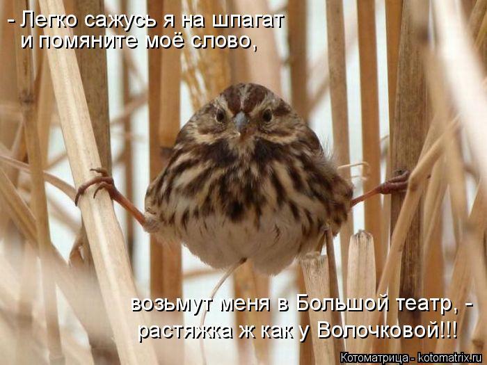 Котоматрица: и помяните моё слово, - Легко сажусь я на шпагат  возьмут меня в Большой театр, - растяжка ж как у Волочковой!!!