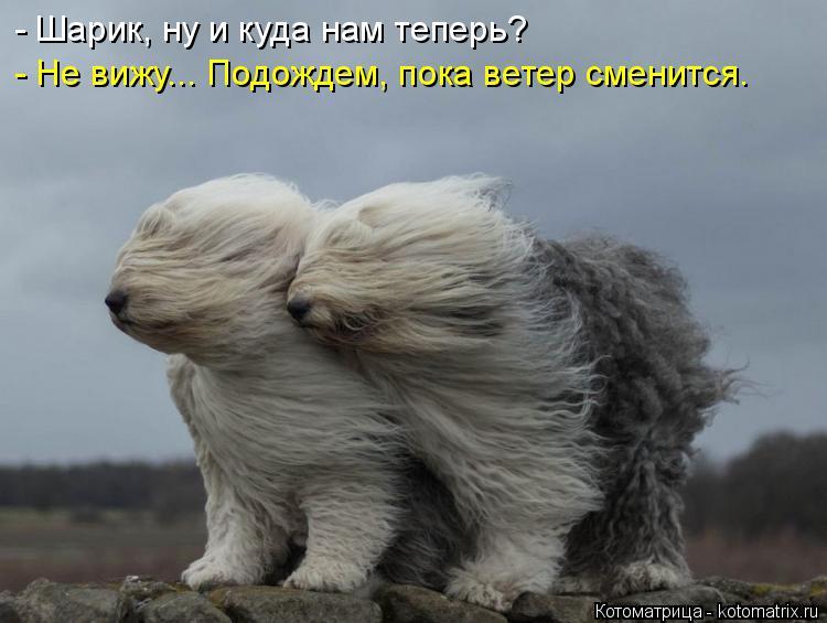 Котоматрица: - Шарик, ну и куда нам теперь? - Не вижу... Подождем, пока ветер сменится.