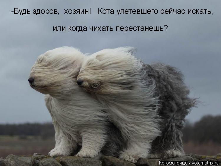 Котоматрица: -Будь здоров,  хозяин!   Кота улетевшего сейчас искать,  или когда чихать перестанешь?