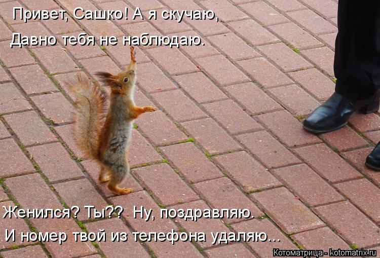 Котоматрица: Привет, Сашко! А я скучаю,  Давно тебя не наблюдаю. Женился? Ты??  Ну, поздравляю. И номер твой из телефона удаляю...