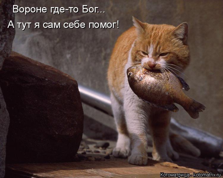 Котоматрица: Вороне где-то Бог... А тут я сам себе помог!