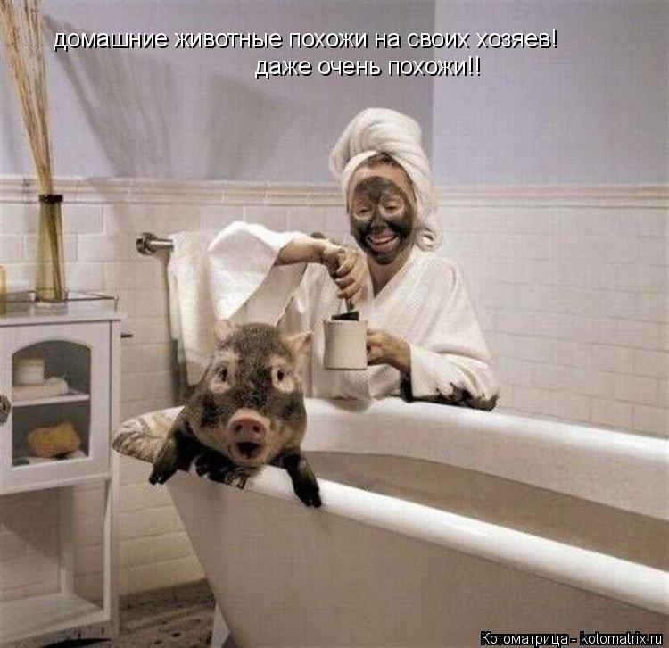 Котоматрица: животные похожи на своих хозяев! даже очень похожи!! домашние
