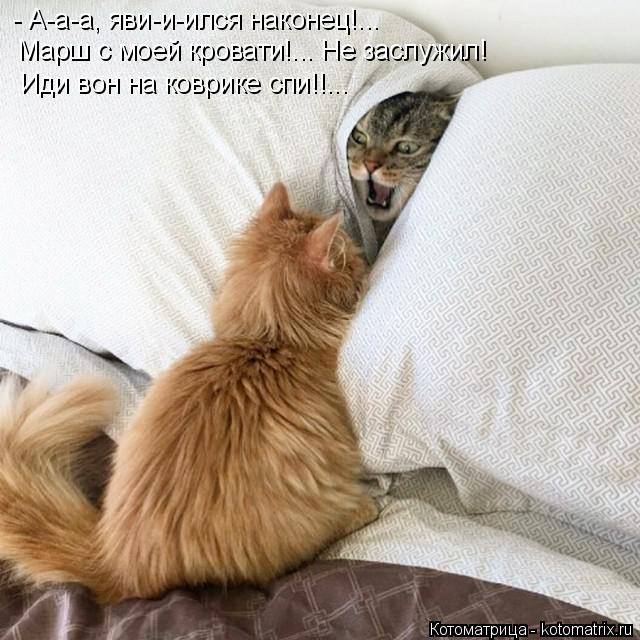 Котоматрица: - А-а-а, яви-и-ился наконец!...  Марш с моей кровати!... Не заслужил! Иди вон на коврике спи!!...