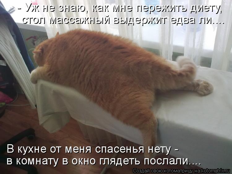 Котоматрица: стол массажный выдержит едва ли.... - Уж не знаю, как мне пережить диету,  В кухне от меня спасенья нету - в комнату в окно глядеть послали....