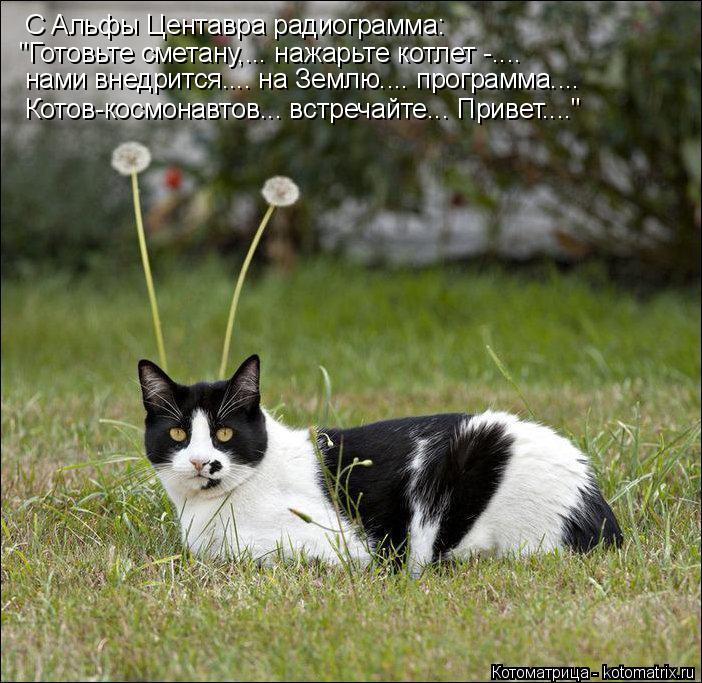 """Котоматрица: С Альфы Центавра радиограмма: """"Готовьте сметану,... нажарьте котлет -.... нами внедрится.... на Землю.... программа.... Котов-космонавтов... встреча"""
