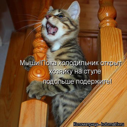 Котоматрица: Мыши!Пока холодильник открыт хозяйку на стуле   подольше подержите!