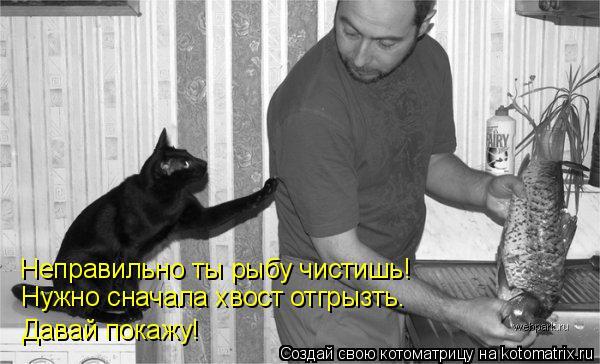 Котоматрица: Неправильно ты рыбу чистишь! Нужно сначала хвост отгрызть. Давай покажу!