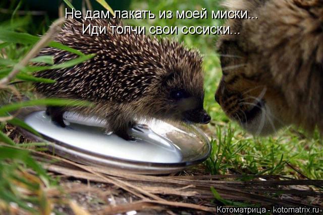 Котоматрица: Не дам лакать из моей миски... Иди топчи свои сосиски...