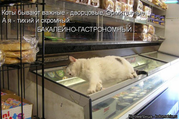 Котоматрица: Коты бывают важные - дворцовые, Эрмитажные, А я - тихий и скромный... БАКАЛЕЙНО-ГАСТРОНОМНЫЙ .