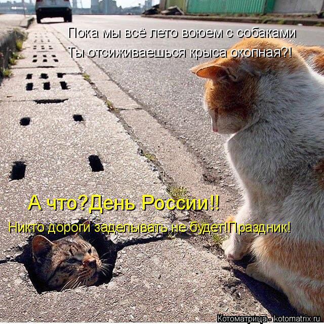 Котоматрица: Пока мы всё лето воюем с собаками Ты отсиживаешься крыса окопная?! А что?День России!! Никто дороги заделывать не будет!Праздник!