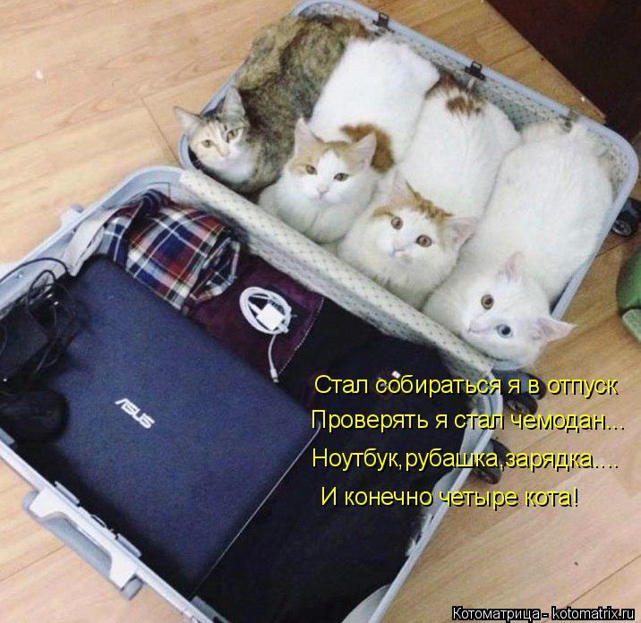 Котоматрица: Стал собираться я в отпуск Проверять я стал чемодан... Ноутбук,рубашка,зарядка.... И конечно четыре кота!
