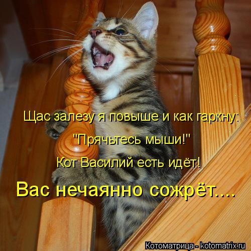 """Котоматрица: Щас залезу я повыше и как гаркну: """"Прячьтесь мыши!"""" Кот Василий есть идёт! Вас нечаянно сожрёт...."""