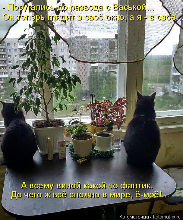 Котоматрица: Он теперь глядит в своё окно, а я - в своё.... - Поругались до развода с Васькой... До чего ж всё сложно в мире, ё-моё!... А всему виной какой-то фант