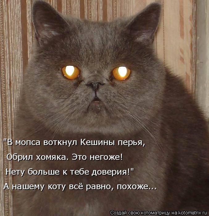 """Котоматрица: """"В мопса воткнул Кешины перья, Обрил хомяка. Это негоже! Нету больше к тебе доверия!"""" А нашему коту всё равно, похоже..."""