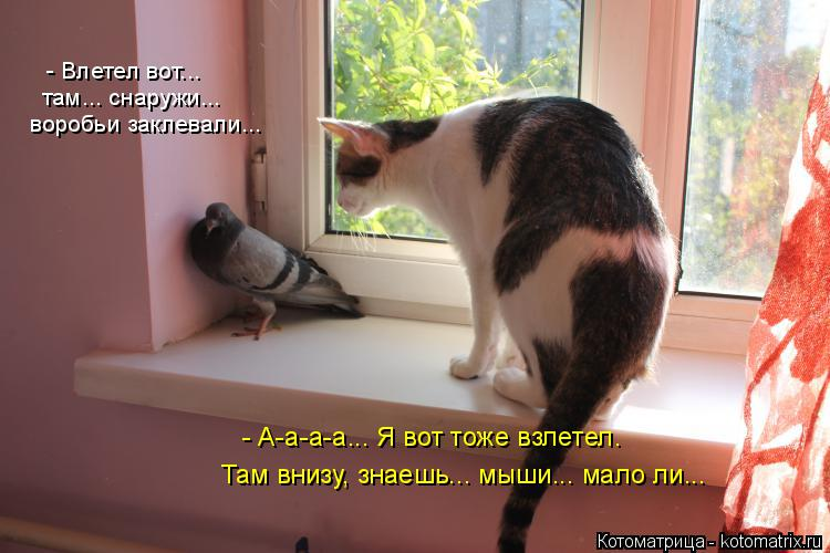 Котоматрица: воробьи заклевали... - Влетел вот... там... снаружи...  Там внизу, знаешь... мыши... мало ли... - А-а-а-а... Я вот тоже взлетел.