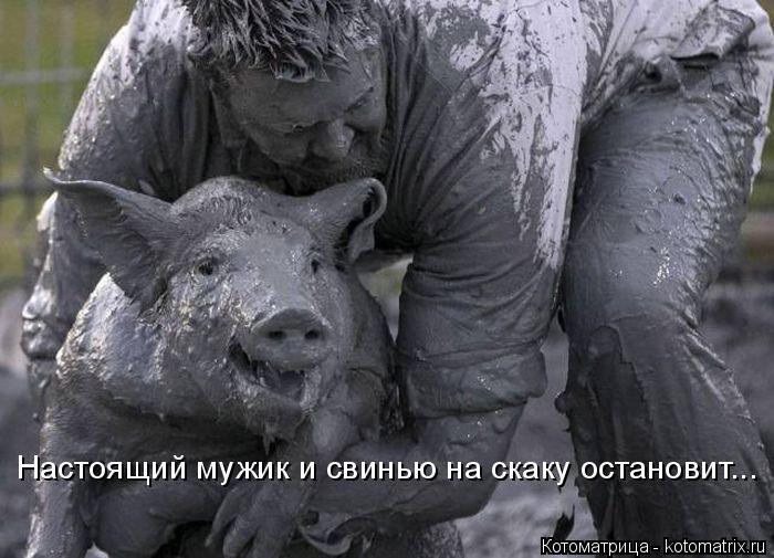 Котоматрица: Настоящий мужик и свинью на скаку остановит...