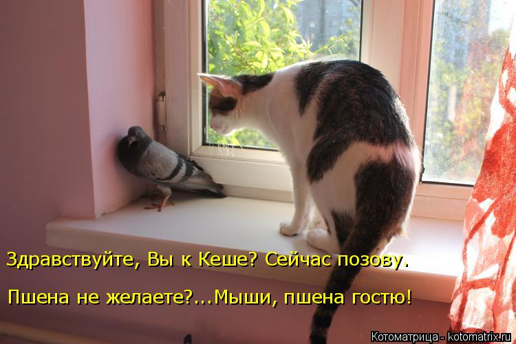 Котоматрица: Здравствуйте, Вы к Кеше? Сейчас позову. Пшена не желаете?...Мыши, пшена гостю!