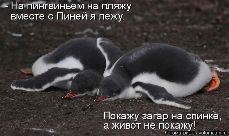 Котоматрица: - На пингвиньем на пляжу  вместе с Пиней я лежу. Покажу загар на спинке, а живот не покажу!