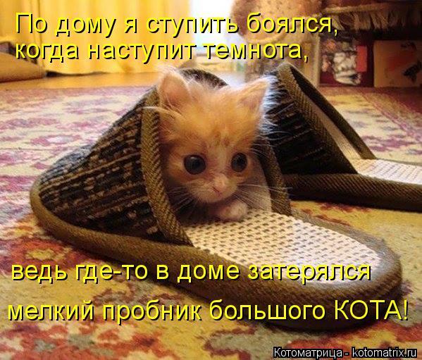 Котоматрица: По дому я ступить боялся, когда наступит темнота, ведь где-то в доме затерялся мелкий пробник большого КОТА!