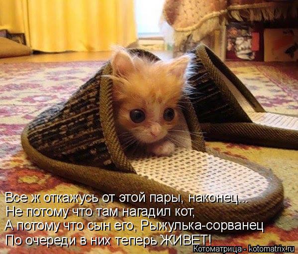 Котоматрица: Не потому что там нагадил кот, А потому что сын его, Рыжулька-сорванец По очереди в них теперь ЖИВЕТ! Все ж откажусь от этой пары, наконец...
